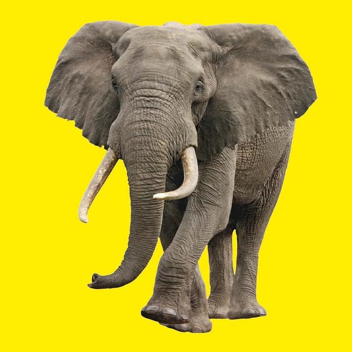 看图说话大象和长颈鹿