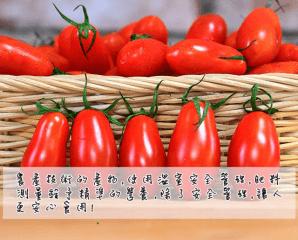 苗栗人氣溫室玉女小番茄,今日結帳再打85折